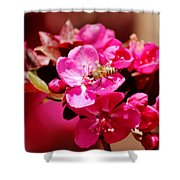 Bee On Pink Blossoms 031015ab Shower Curtain