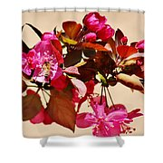 Bee On Pink Blossoms 031015ac Shower Curtain