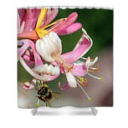 Bee On Pink Honeysuckle Shower Curtain