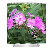 Bee On Pink Phlox Shower Curtain