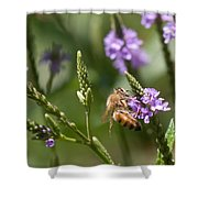 Bee On Purple Loosestrife  Shower Curtain