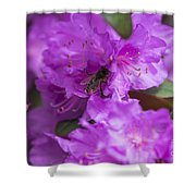 Bee On Rhododendrons Shower Curtain