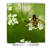 Bee On Top Of The Flower - Featured 3 Shower Curtain