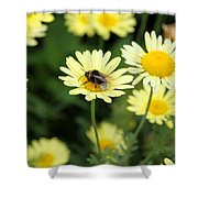 Bee On Yellow Shower Curtain