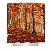 Beech Forest Shower Curtain