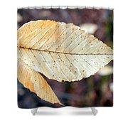 Beech Leaf In Winter Shower Curtain