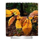 Beech Leaves In Winter Shower Curtain