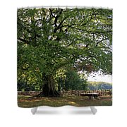 Beech Tree Britain Shower Curtain