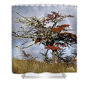 Beech Tree, Chile Shower Curtain