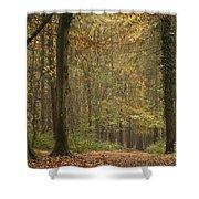 Beech Wood Walk Shower Curtain