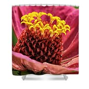 Bee's-eye View Shower Curtain