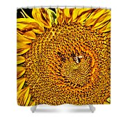 Bees On Sunflower Hdr Shower Curtain