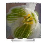 Bee's View Of A Snowdrop Shower Curtain