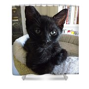 Beethoven Keeping Watch Shower Curtain