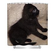 Beethoven Sitting Shower Curtain