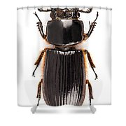 Beetle Aceraius Grandis Shower Curtain