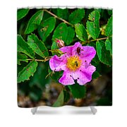 Beetle And Fly On Wild Rose Shower Curtain