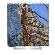 Beetle Barren Pine Shower Curtain