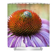 Beetle Bug Shower Curtain