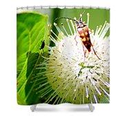Beetle On Buttonbush Shower Curtain