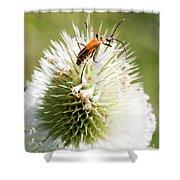 Beetle On White Spiky Wild Flower Shower Curtain