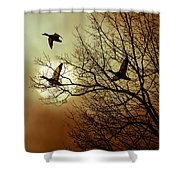 Before A Winter Sky Shower Curtain by Bob Orsillo