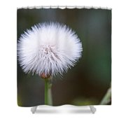 Before The Wind Blows Shower Curtain