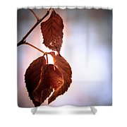 Before We Fall Shower Curtain