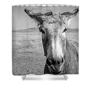 Begging Burro Shower Curtain