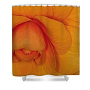 Begonia 3 Shower Curtain