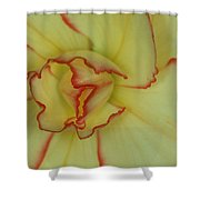 Begonia 4 Shower Curtain