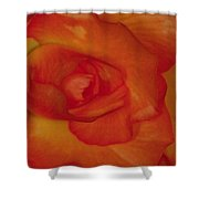 Begonia 5 Shower Curtain