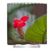 Episcia Flower Shower Curtain