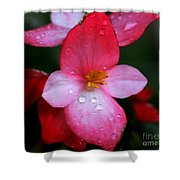 Begonia Shower Curtain