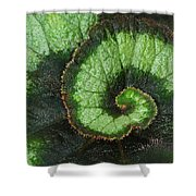 Begonia Leaf 2 Shower Curtain