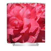 Begonia Named Non-stop Pink Shower Curtain