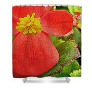 Begonia Volumia Shower Curtain