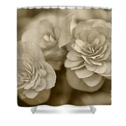 Begonias In Sepia Shower Curtain