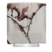 More Than No. 1401 Shower Curtain