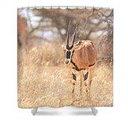 Beisa Oryx Orxy Beisa Shower Curtain