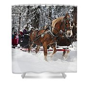 Belgian Draft Horses Pulls A Sleigh In Yosemite National Park Shower Curtain