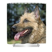 Belgian Laekenois Dog Shower Curtain