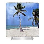 Beautiful Belize Palms Shower Curtain