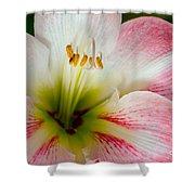 Belladonna Lily Detail Shower Curtain