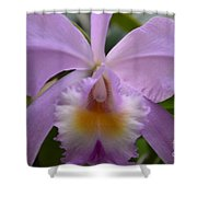 Belle Isle Orchid Shower Curtain