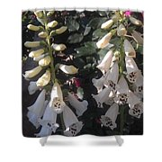 Bells Of Beauty Shower Curtain