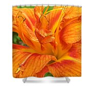 Belly Laughing Shower Curtain