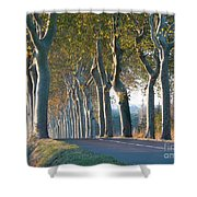 Beloved Plane Trees Shower Curtain