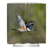 Belted Kigfisher Female Flying Shower Curtain