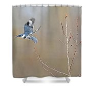 Belted Kingfisher 3 Shower Curtain